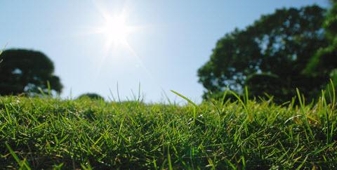 太陽光の大切さ